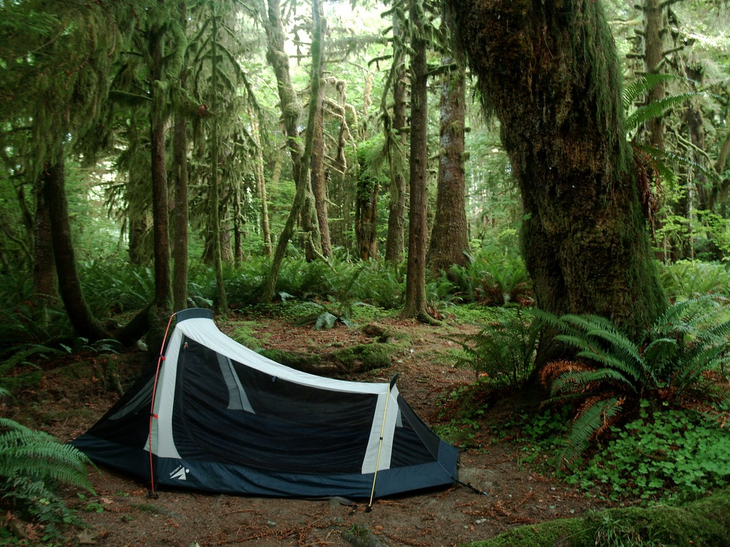 Free Campsite In The Hoh Rainforest National Forest, Washingtonu0027s Olympic  Peninsula