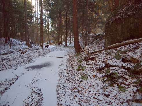 Frozen puddles on the old logging road. Almost solid enough to walk across!