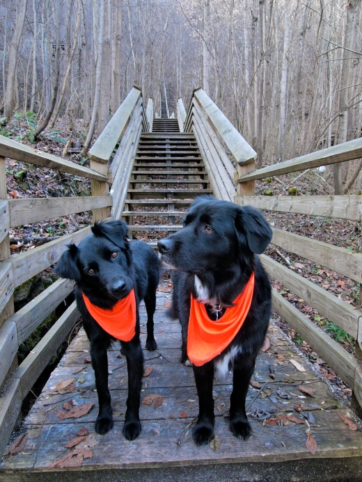 Kaymoor Steps Dogs, WV