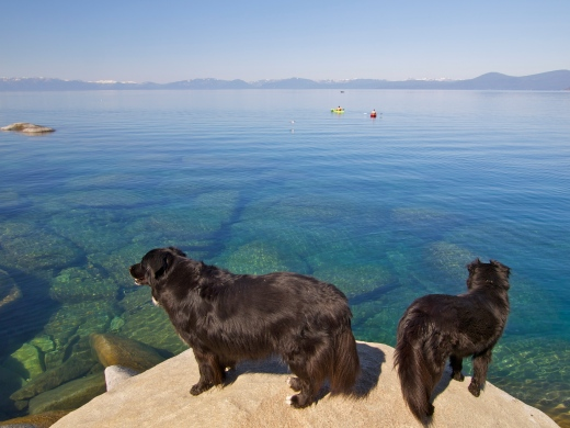 You've come a long way, baby. Lake Tahoe Dogs!