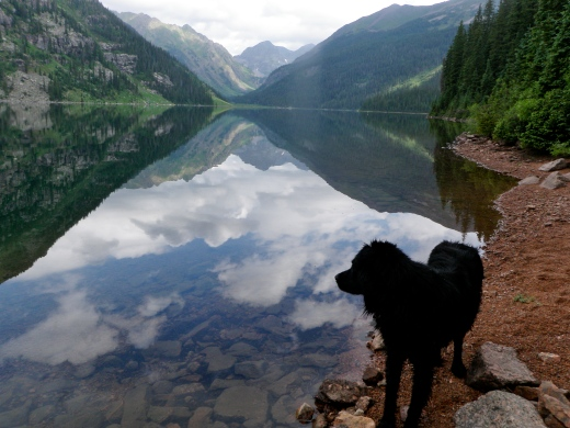 Emerald Lake Dog