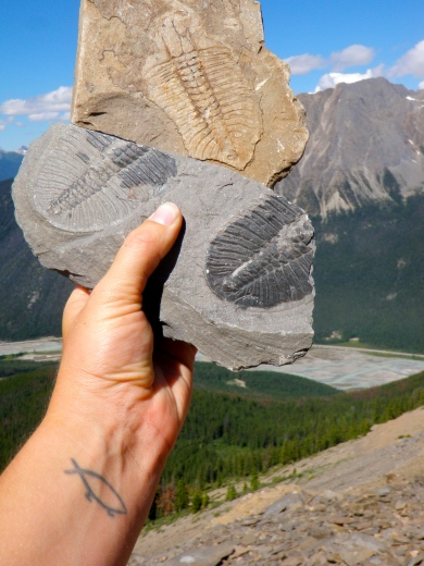 Trilobite fossils from the Burgess Shale