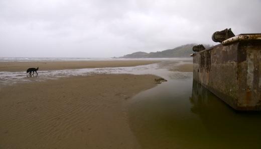 Dock, Low Tide