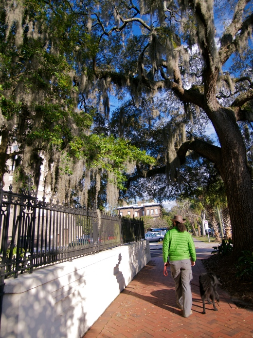 Savannah Stroll with Georgia-native Drew