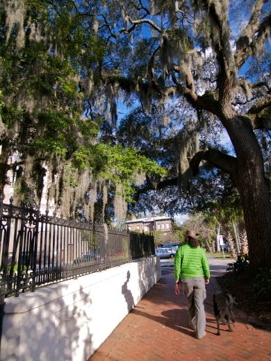 Walking through Savannah