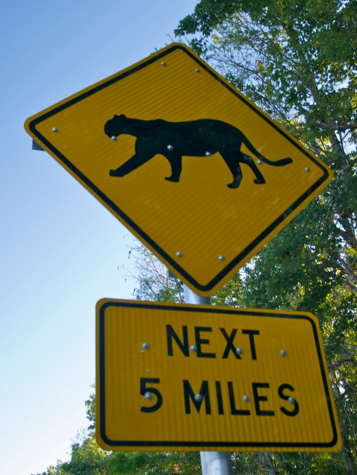 Panther Crossing, Florida Panther National Wildlife Refuge