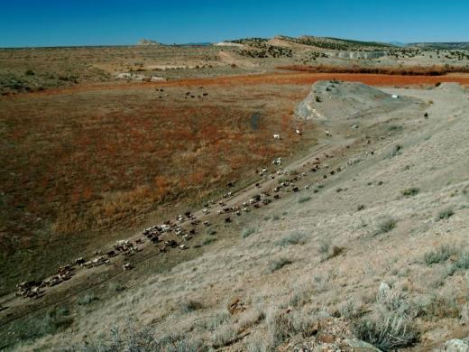 The Goat Herd, near the Galisteo Dam