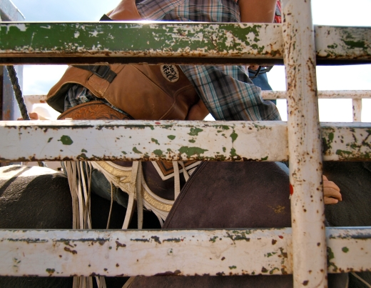 In the Bull Chute