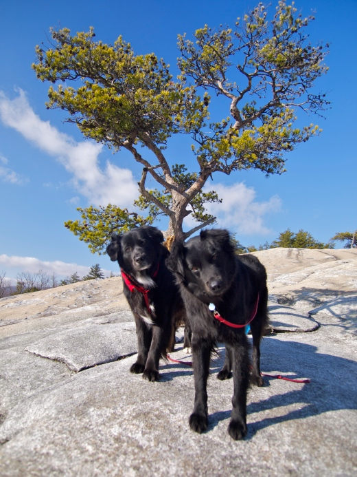 Stone Mountain Dogs