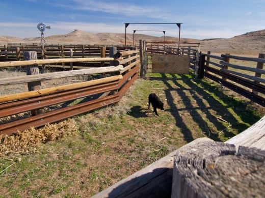 Cattle Chutes II