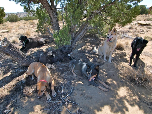 Hiking with six good dogs