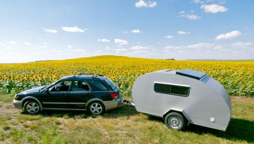 North Dakota Sunflowers!