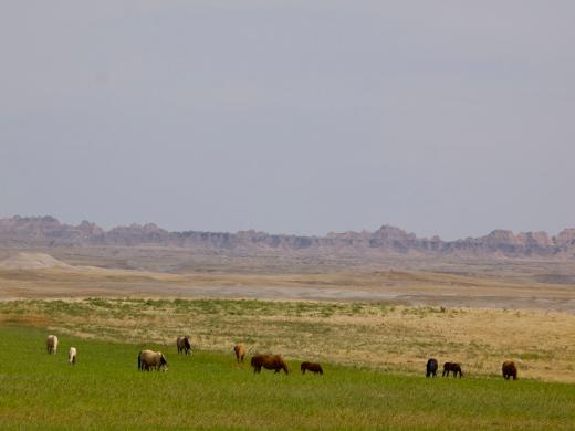 Pine Ridge Horses