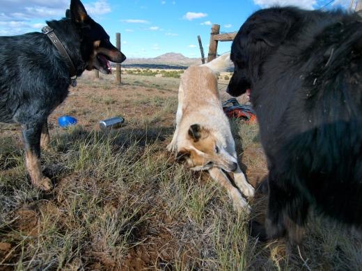 Dog Reunion!