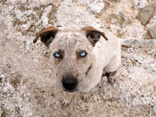 Salty Dog Bruce