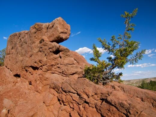 Rock & Tree