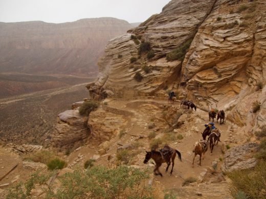 A strong of packhorses running up canyon through the storm