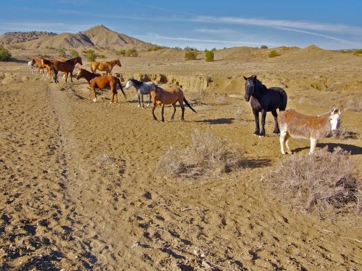 Desert Traffic Jam