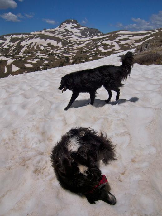 Happy Snowday Dogs!