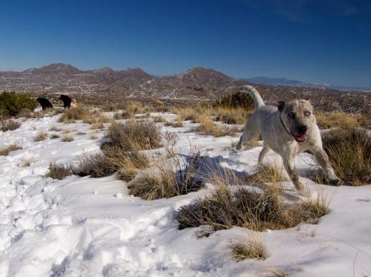 Desert Dogs, Cerrillos Hills