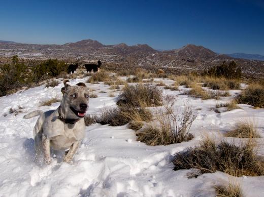 Ecstatic Desert Dogs, Snowy Cerrillos