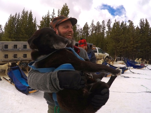"""Jaws"", held here by the lead musher, is the matriarch of this team. She's 11 and still loves to pull."