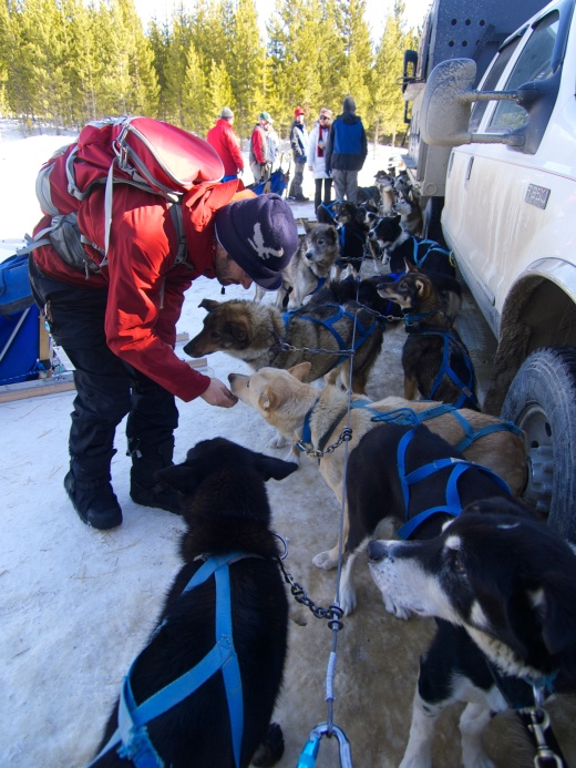Greeting the dogs. There were over 60 dogs here – five teams of ten, plus extras – and we petted each and every one of them at least twice. Most were super sweet, a few were shy and none were unfriendly.