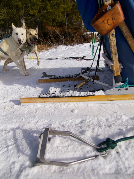 After about five miles we stopped the teams for a hot chocolate break. These metal cleats helped hold the sleds in place. If it were up to the dogs, they'd never stop.