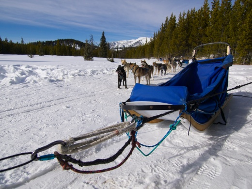 The Sled Hitch. Lots of redundancy in those knots so there's no way the team can come loose from the sled.