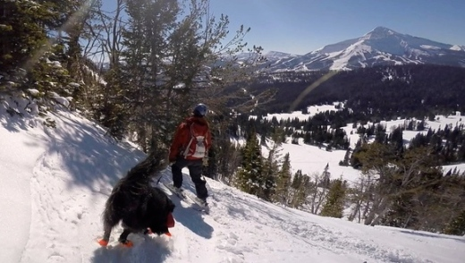 Dio's quite the powder hound! Skiing Beehive Basin with Lone Peak in the background