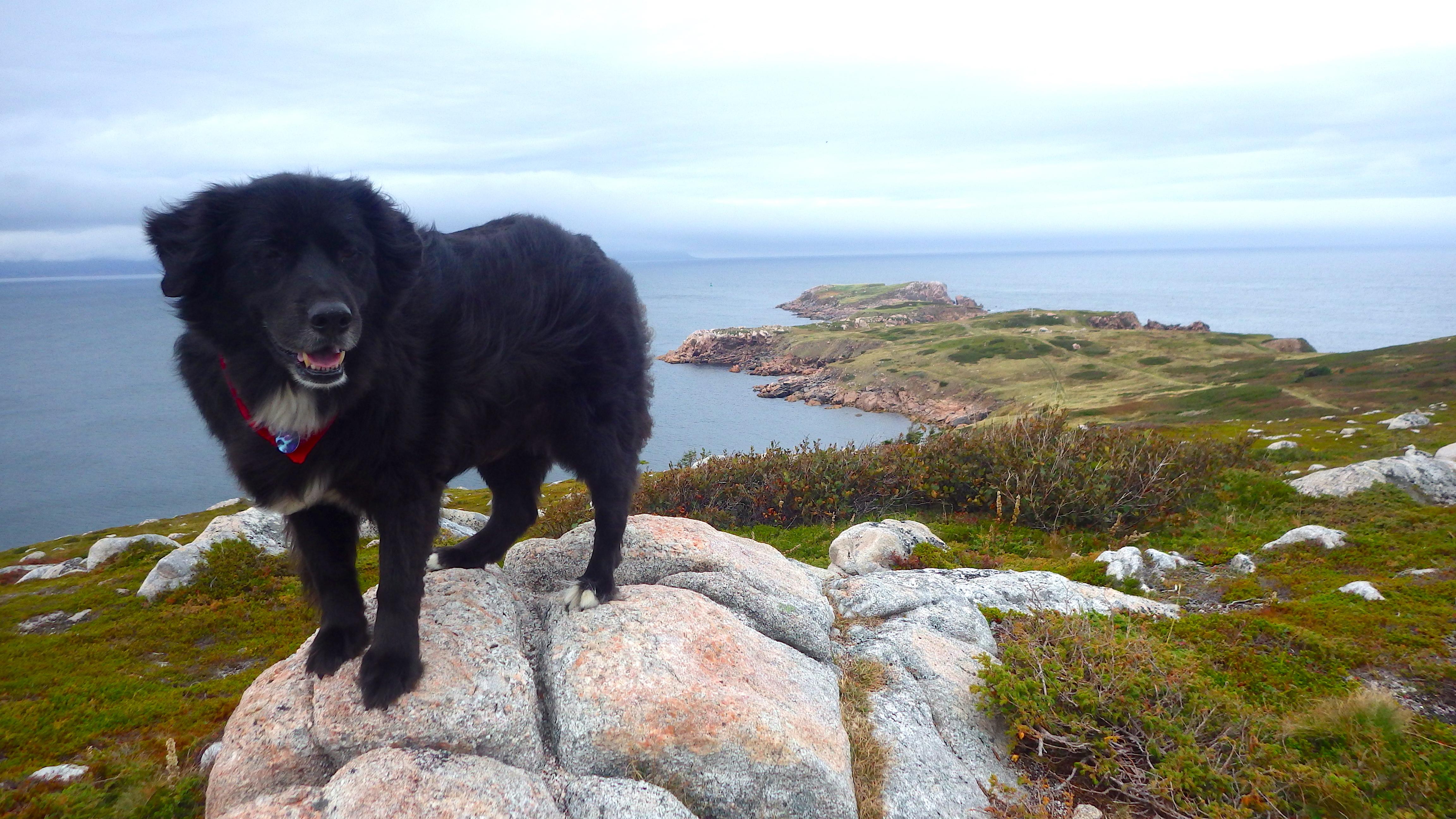 Cape Breton Free Dogs