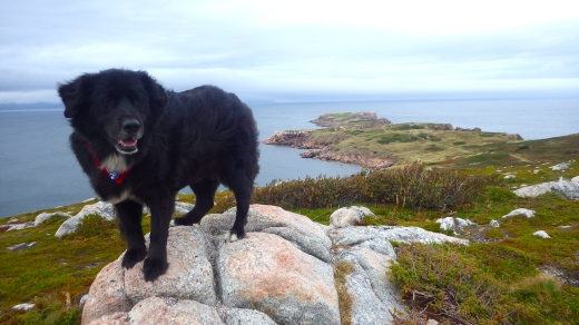 Part-newfie King Bowie getting a glimpse of Newfoundland in the distance from Cape Breton