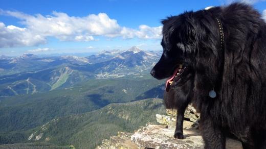 Lone Peak D.O.G. from Wilson Peak