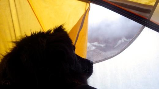 Tent Bound D.O.G.