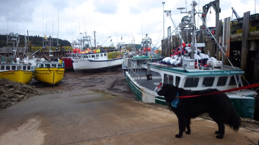 Alma Harbor, Low Tide