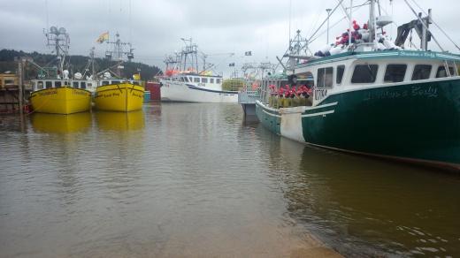 Alma Harbor, High Tide