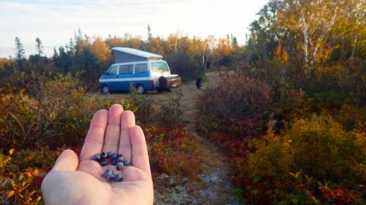 Blueberry Camping, Nova Scotia