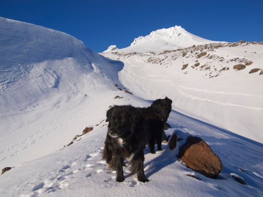 Dogs at Mount Hood
