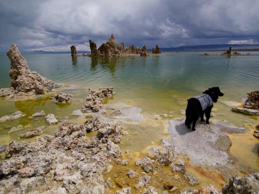 Mono Lake D.O.G.